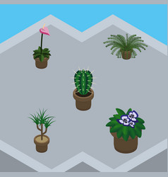 isometric flower set of grower houseplant peyote vector image vector image