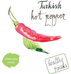 Watercolor turkish hot pepper vector