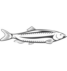 herring fish design isolated on a white background vector image vector image