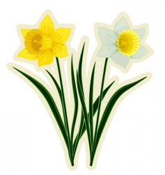 Yellow and white daffodils vector
