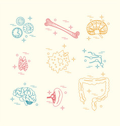 Immune system icon set vector