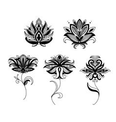 Indian and persian paisley flowers vector