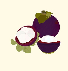 Mangosteen fruit vector