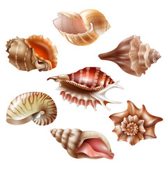 realistic seashell set vector image