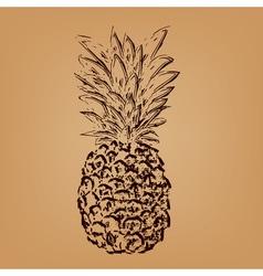 Pinjeapple sketch vector image