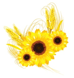 sunflowers vector image