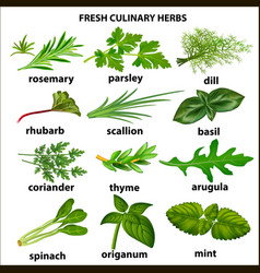 a set of culinary herbs for a restaurant vector image vector image