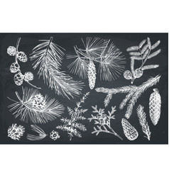 Christmas plants collection vector
