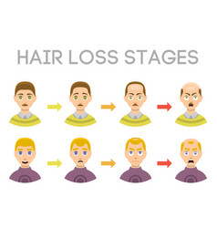 Information chart of hair loss stages types of vector