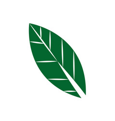 Leaf icon foliage natural flat design style vector