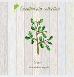 Myrrh essential oil label aromatic plant vector
