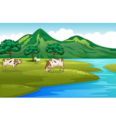 Cows and goat at the riverbank vector image vector image
