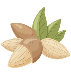 almond vector image