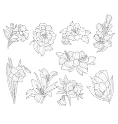 Flower collection hand drawn vector