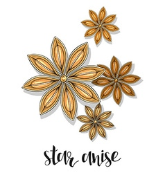 Star anise isolated object sketch Spice for food vector image vector image