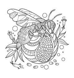 Wasp coloring book for adults vector