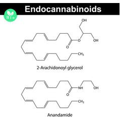 Endocannabinoids chemical molecular structures vector