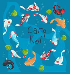 carp koi traditional sacred japanese fish colorful vector image