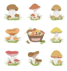 Eatable mushrooms realistic drawings set vector