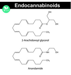 Endocannabinoids chemical molecular structures vector