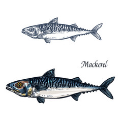 mackerel fish isolated sketch icon vector image vector image