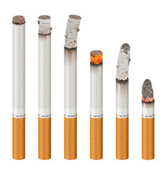 realistic cigarettes set stages of burn vector image