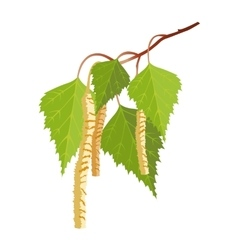 Birch with leaves and buds isolated on white vector