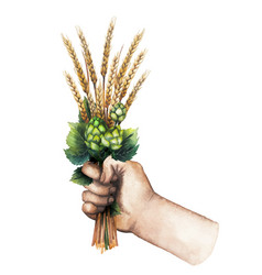watercolor hand with malt bunch vector image