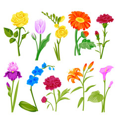 Beautiful watercolor flower set handmade style vector