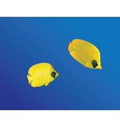 Masced butterfly fish vector