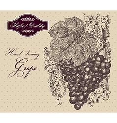Vintage grapes vector