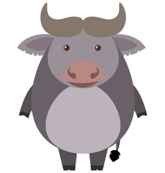 cute buffalo on white background vector image