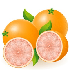 grapefruit vector image