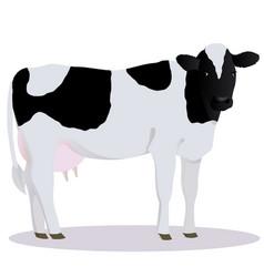 Holstein friesian cattle vector