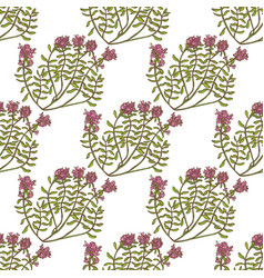 Colored wild thyme seamless pattern hand drawn vector