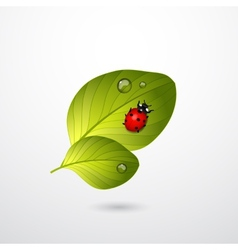 Two green leaves with red lady bug vector