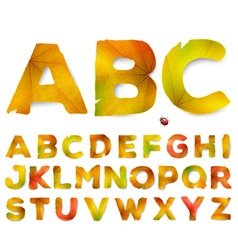 alphabet letters made from autumn leaves vector image