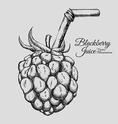 fruit drawn design vector image vector image