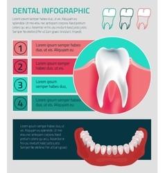 Teeth infographic vector