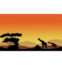 The giraffes on the hills vector