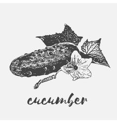 vegan organic cucumber vector image vector image