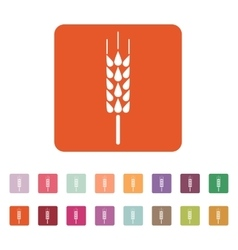 The spica icon wheat symbol flat vector
