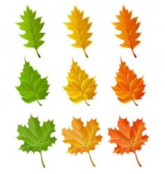set of autumn season leaves vector image