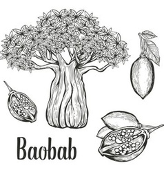 Baobab Icon Set vector image vector image