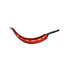 color sketch hot peppers vector image vector image