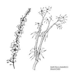 Hand drawn set of sakura and bamboo vector image
