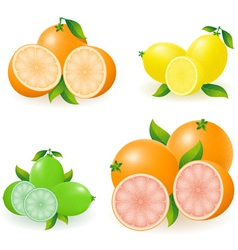 Set of citrus 02 vector