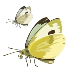 Butterfly with yellow wings insect vector