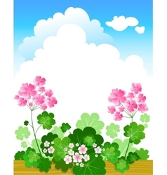 Geranium summer background vector image