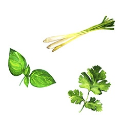 Set of realistic watercolor herbs on white vector image